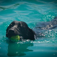 SPLASH – One Great Dog