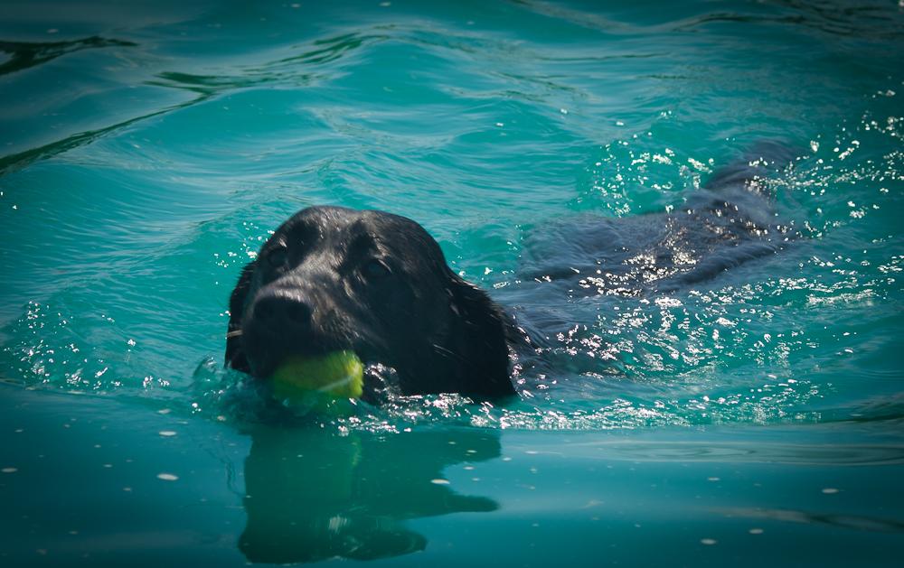 SPLASH – One Great Dog