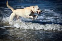 DOG BEACH | San Diego