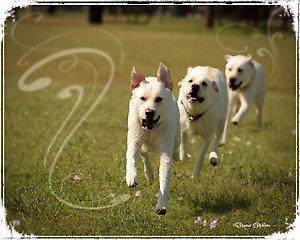 DogPark-7.jpg